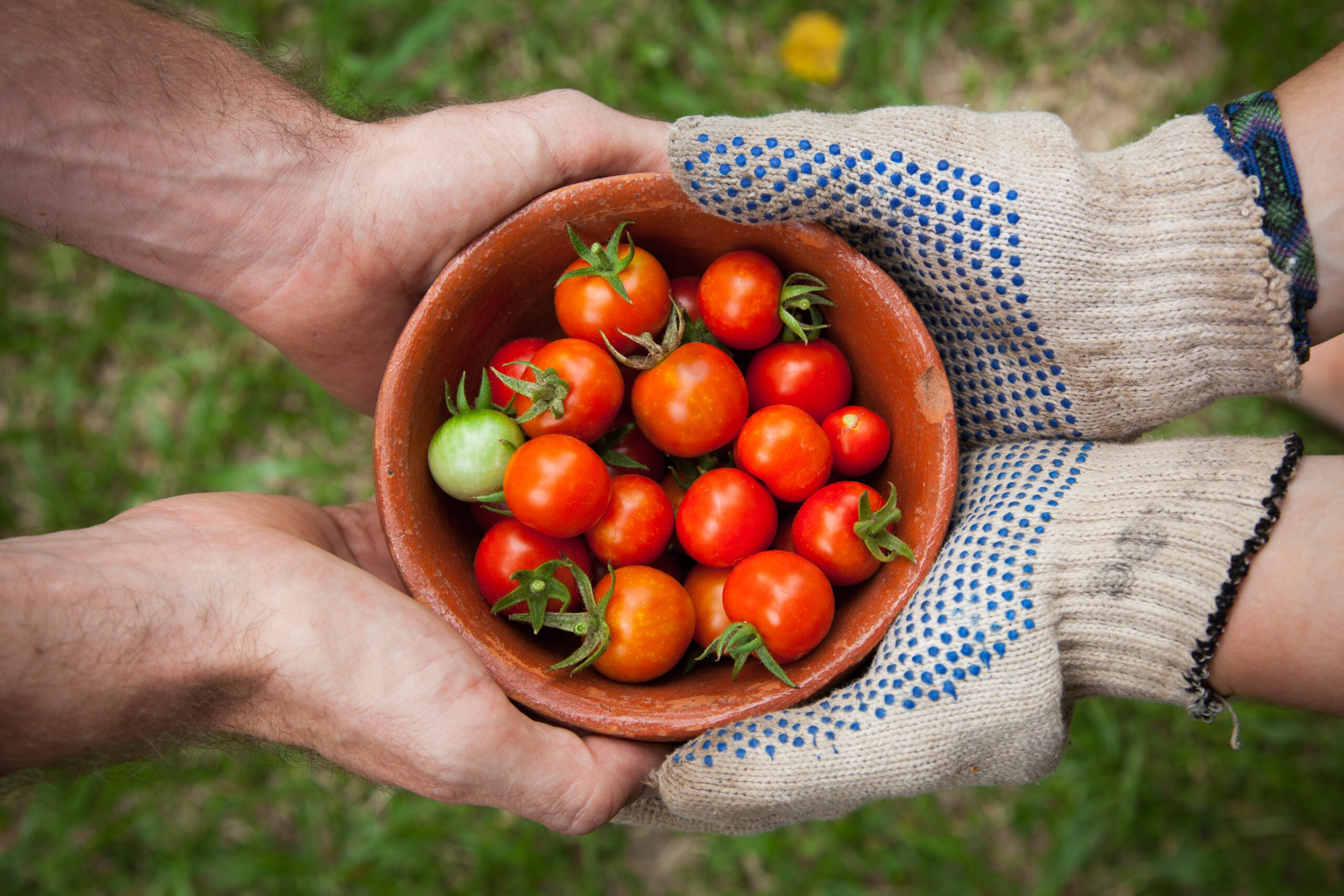 Contributing to Safe Food Production in Canada and Around the World