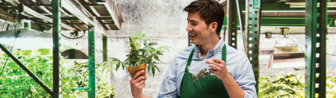 SCC & UL partner to help establish guidelines for the creation of an ISO Technical Committee on cannabis